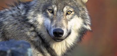 Dzikie zwierzęta a ludzie-784